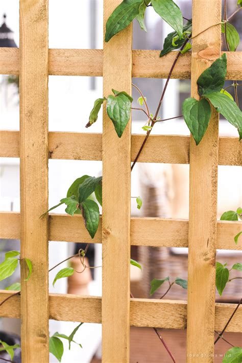 Diy Planter And Trellis